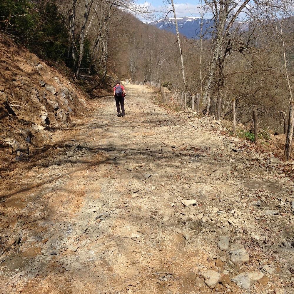 Décapage de la piste forestière avant empierrement