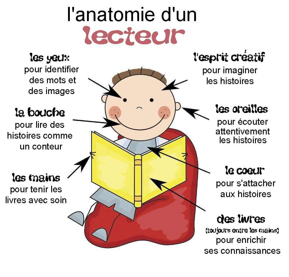 Anatomie d'un lecteur